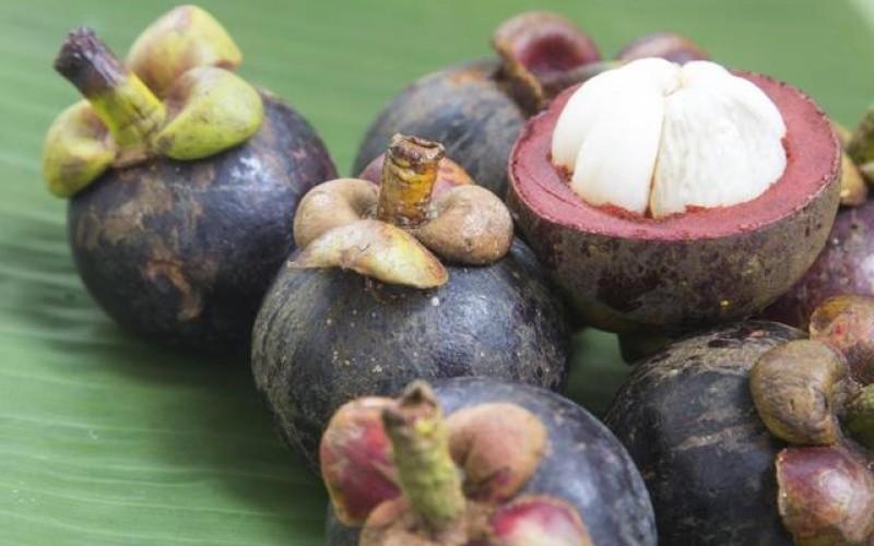 Benefícios do Mangostão para a sua Saúde