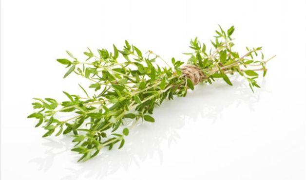 ervas que ajudam a emagrecer