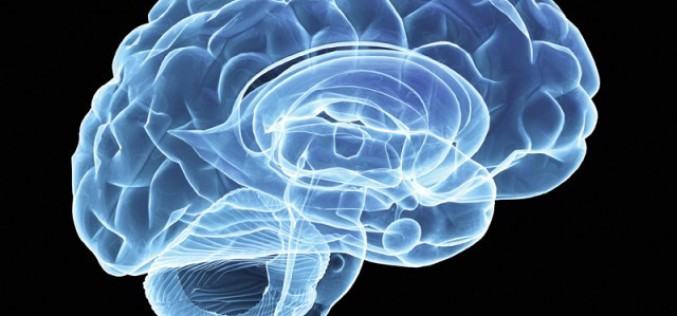 Como manter a saúde do cérebro com chás naturais