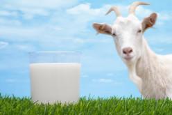Benefícios do leite de cabra para a saúde