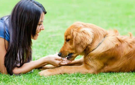 Ter um animal de estimação pode melhorar a nossa saúde
