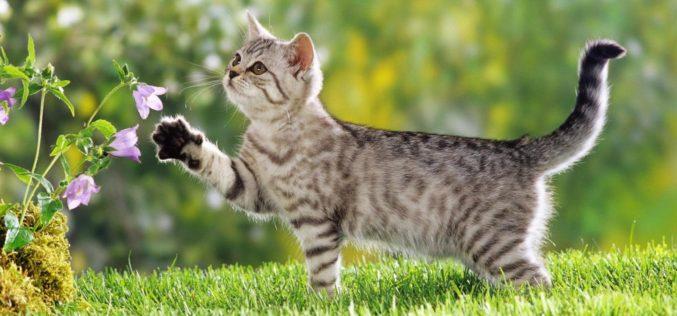 Tudo sobre a alergia a pelos de gato