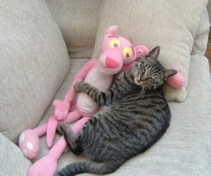 gato_com_brinquedo