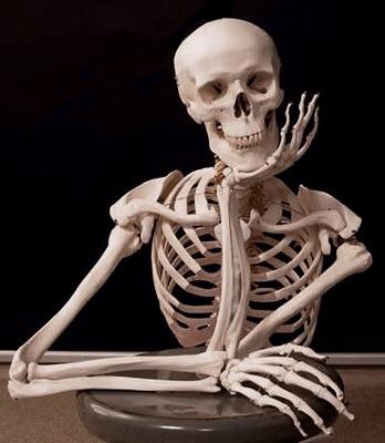 curiosidades-esqueleto